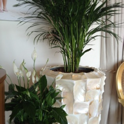 seaside-palm-office-plants-radica